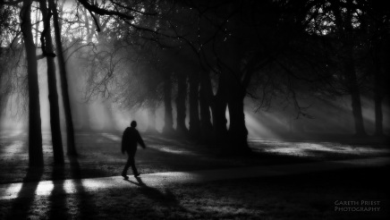 sunlight-trees-landscape-contrast-forest-white-black-monochrome-portrait-dark-city-night-creepy-horror-water-nature-urban-sky-park-shadow-spooky-winter-photography-silhouette-branch-sunrise-surreal-cold-evening-morning-mist.jpg